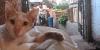 cat480x240.jpg